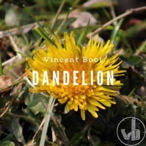 Vincent Boot - Dandelion